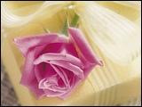 典雅鮮花攝影 11 - [wall001.com]_flower_photograph_A085022.jpg